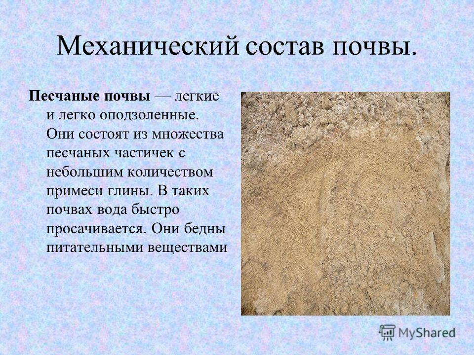 Механический состав почвы. Песчаные почвы легкие и легко оподзоленные. Они состоят из множества песчаных частичек с небольшим количеством примеси глины. В таких почвах вода быстро просачивается. Они бедны питательными веществами