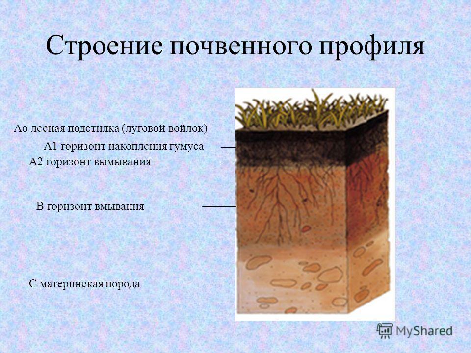 Строение почвенного профиля Аo лесная подстилка (луговой войлок) А1 горизонт накопления гумуса А2 горизонт вымывания В горизонт вмывания С материнская порода