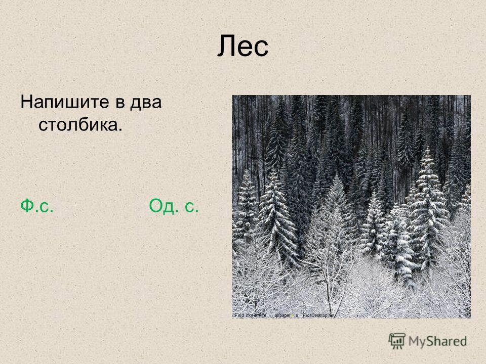 Лес Напишите в два столбика. Ф.с. Од. с.