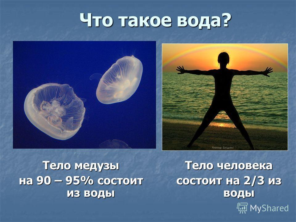 Что такое вода? Тело медузы на 90 – 95% состоит из воды Тело человека состоит на 2/3 из воды