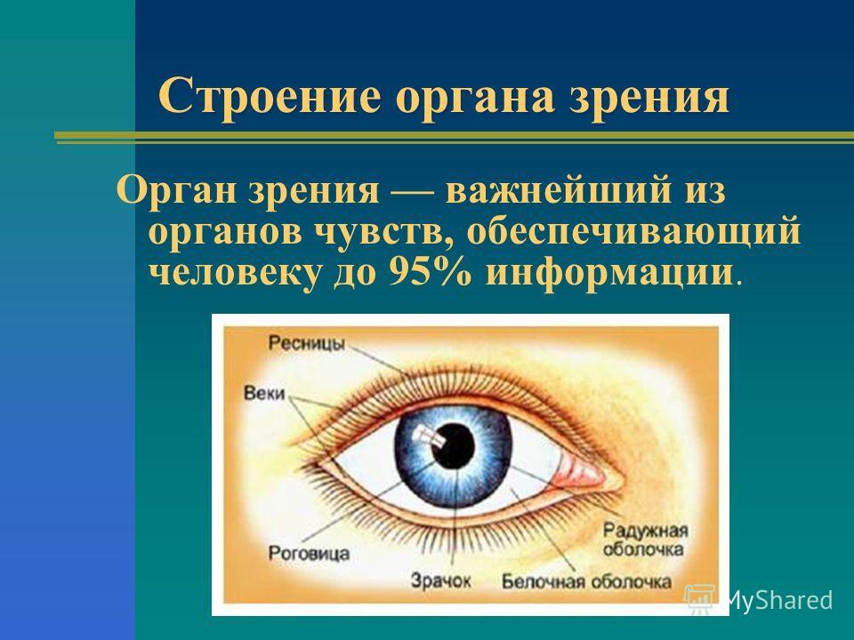 Строение органа зрения Орган зрения важнейший из органов чувств, обеспечивающий человеку до 95% информации.