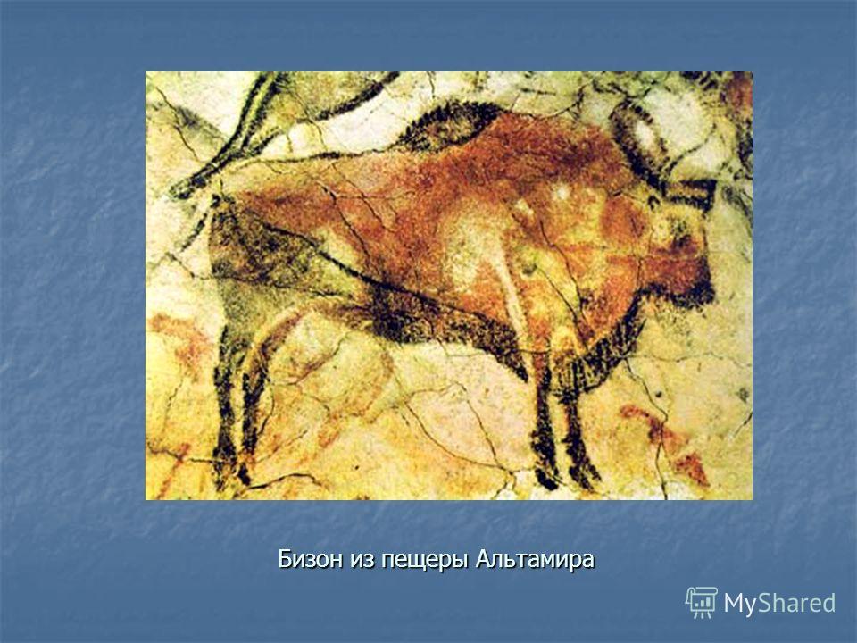 Бизон из пещеры Альтамира