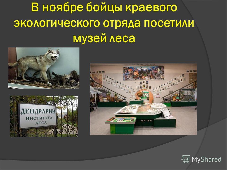 В ноябре бойцы краевого экологического отряда посетили музей леса