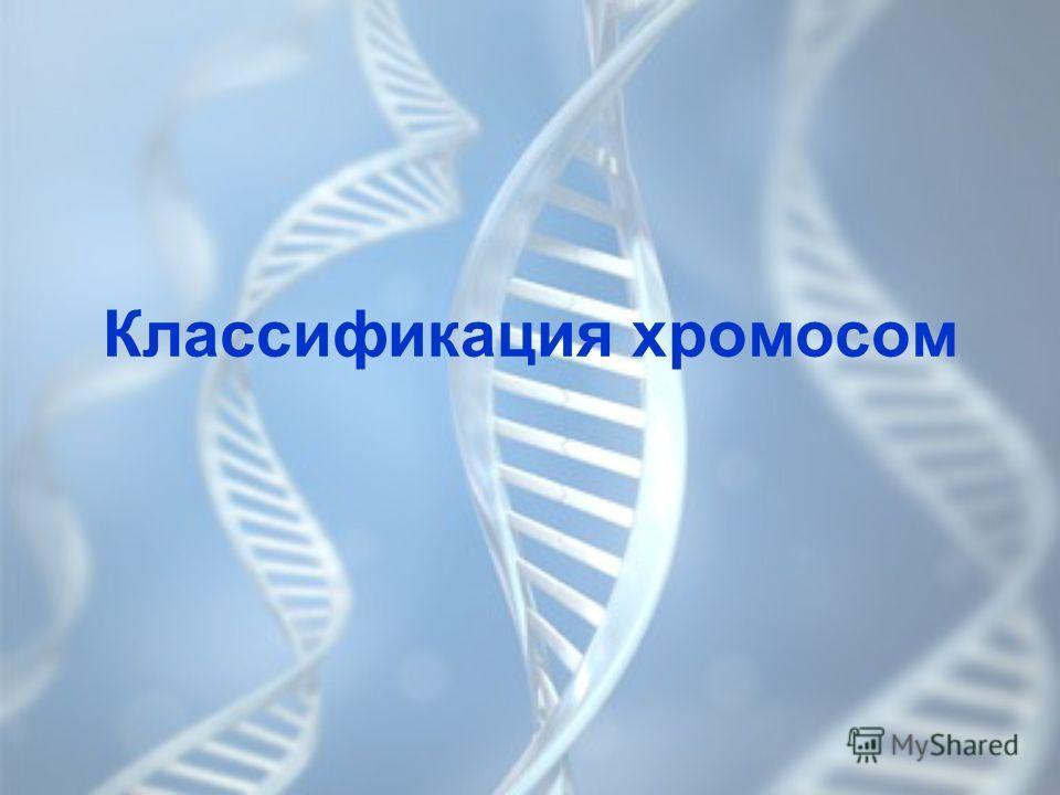Классификация хромосом
