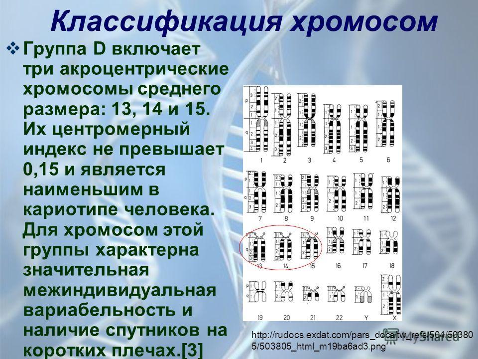 Группа D включает три акроцентрические хромосомы среднего размера: 13, 14 и 15. Их центромерный индекс не превышает 0,15 и является наименьшим в кариотипе человека. Для хромосом этой группы характерна значительная межиндивидуальная вариабельность и н