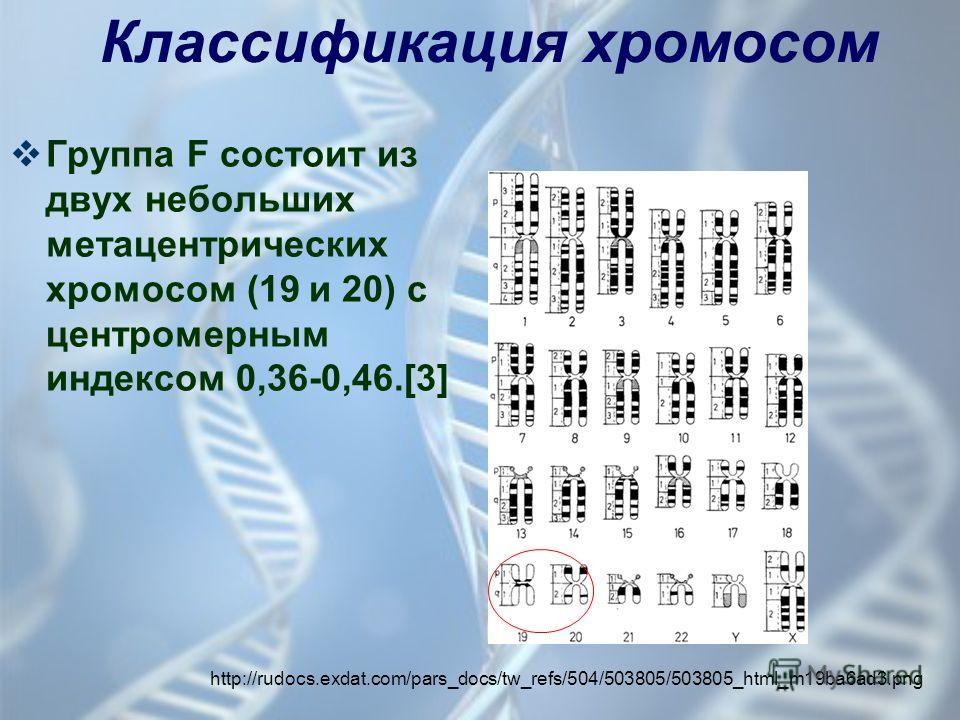 Группа F состоит из двух небольших метацентрических хромосом (19 и 20) с центромерным индексом 0,36-0,46.[3] http://rudocs.exdat.com/pars_docs/tw_refs/504/503805/503805_html_m19ba6ad3. png Классификация хромосом