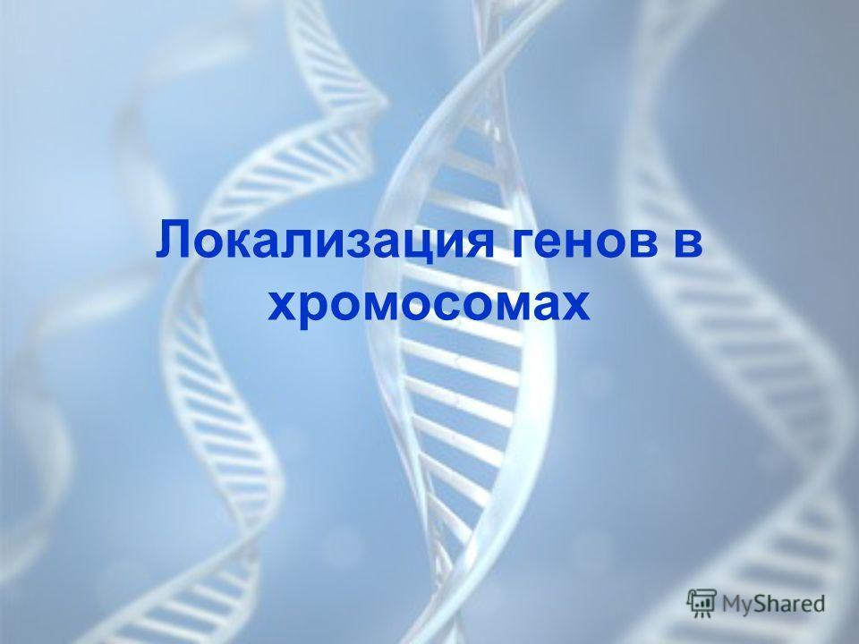 Локализация генов в хромосомах