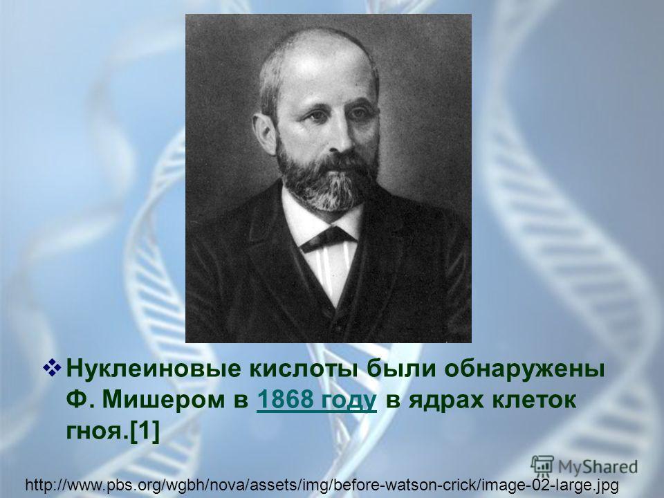 Нуклеиновые кислоты были обнаружены Ф. Мишером в 1868 году в ядрах клеток гноя.[1] http://www.pbs.org/wgbh/nova/assets/img/before-watson-crick/image-02-large.jpg