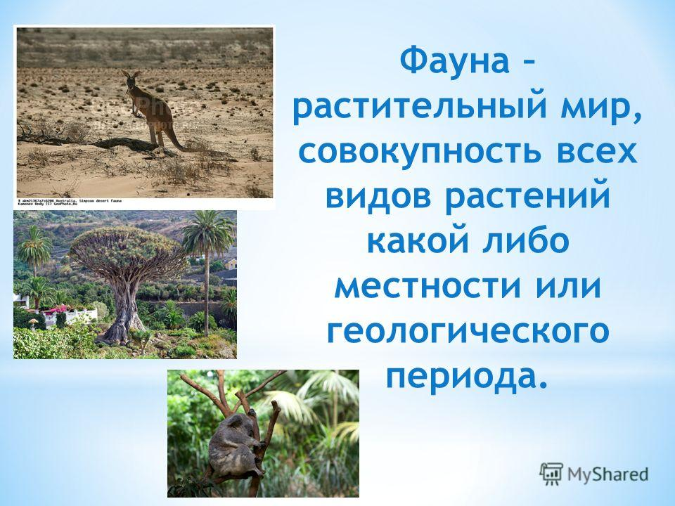 Фауна – растительный мир, совокупность всех видов растений какой либо местности или геологического периода.