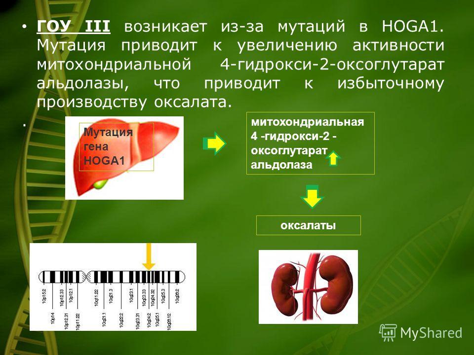 ГОУ III возникает из-за мутаций в HOGA1. Мутация приводит к увеличению активности митохондриальной 4-гидрокси-2-оксоглутарат альдолазы, что приводит к избыточному производству оксалата.. Мутация гена HOGA1 митохондриальная 4 -гидрокси-2 - оксоглутара