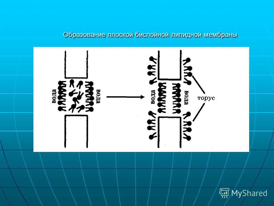Образование плоской бислойной липидной мембраны
