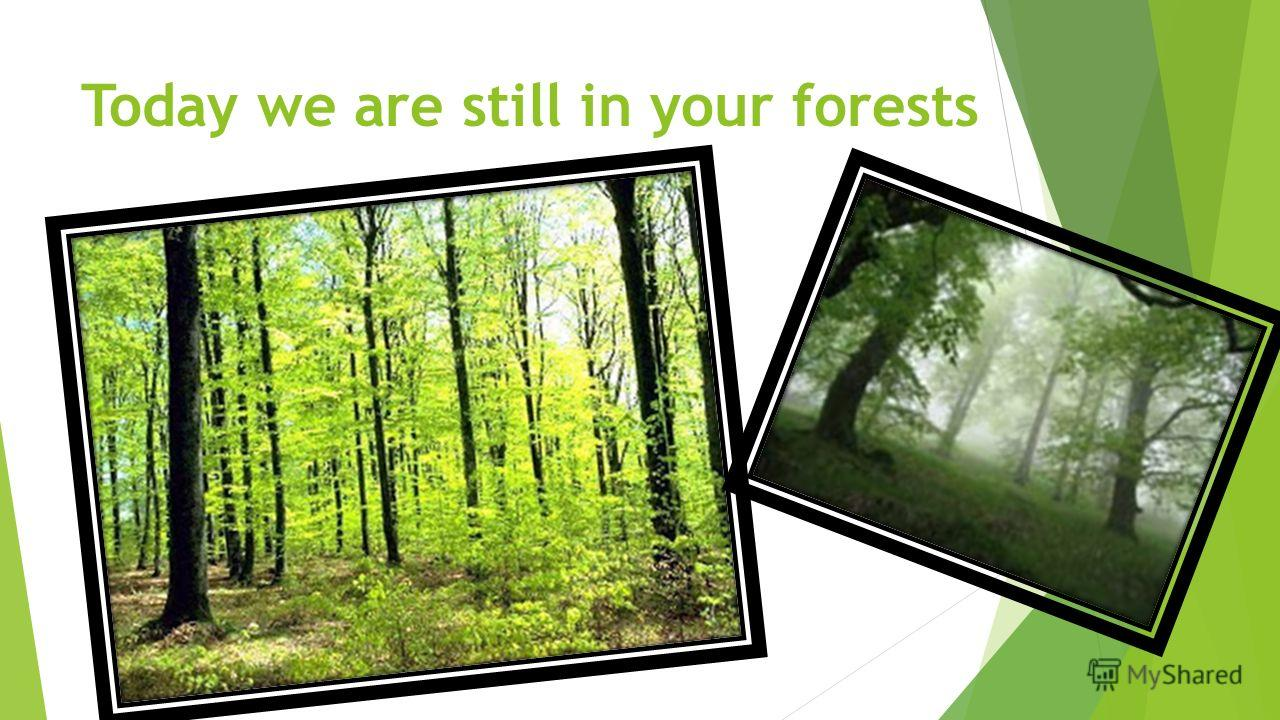 Today we are still in your forests
