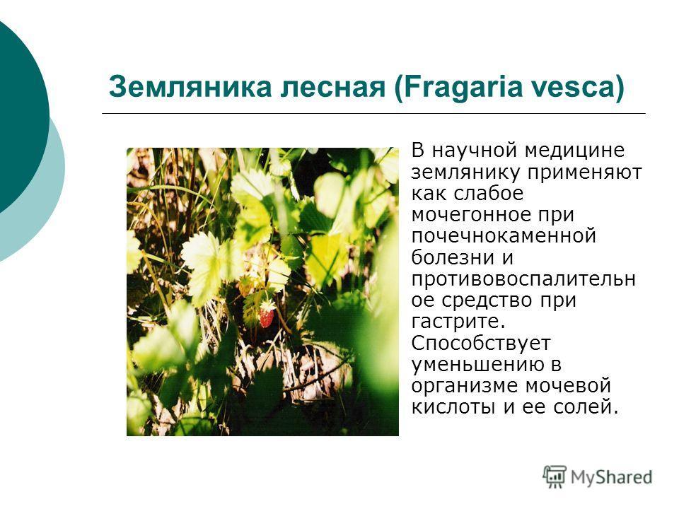 Земляника лесная (Fragaria vesca) В научной медицине землянику применяют как слабое мочегонное при почечнокаменной болезни и противовоспалительное средство при гастрите. Способствует уменьшению в организме мочевой кислоты и ее солей.