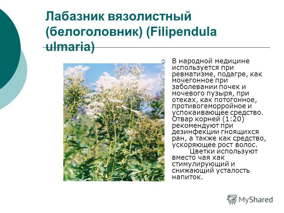 Лабазник вязолистный (белоголовник) (Filipendula ulmaria) В народной медицине используется при ревматизме, подагре, как мочегонное при заболевании почек и мочевого пузыря, при отеках, как потогонное, противогеморройное и успокаивающее средство. Отвар