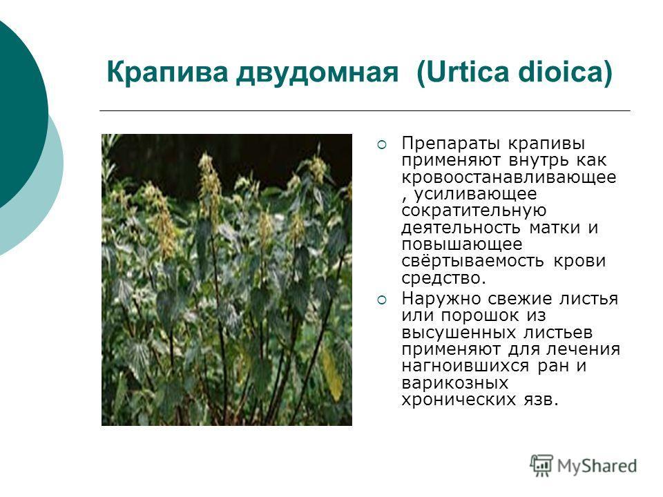 Крапива двудомная (Urtica dioica) Препараты крапивы применяют внутрь как кровоостанавливающийее, усиливающее сократительную деятельность матки и повышающее свёртываемость крови средство. Наружно свежие листья или порошок из высушенных листьев применя
