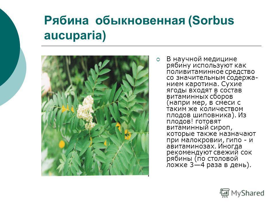 Рябина обыкновенная (Sorbus aucuparia) В научной медицине рябину используют как поливитаминное средство со значительным содержа нием каротина. Сухие ягоды входят в состав витаминных сборов (напри мер, в смеси с таким же количеством плодов шиповника)