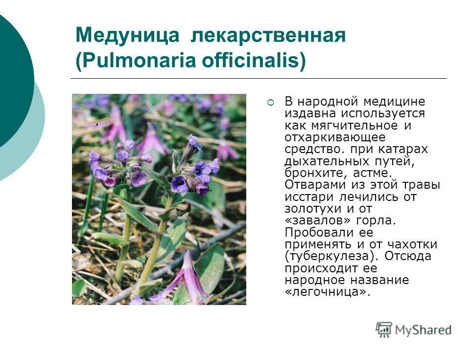 Медуница лекарственная (Pulmonaria officinalis) В народной медицине издавна используется как мягчительное и отхаркивающее средство. при катарах дыхательных путей, бронхите, астме. Отварами из этой травы исстари лечились от золотухи и от «завалов» гор