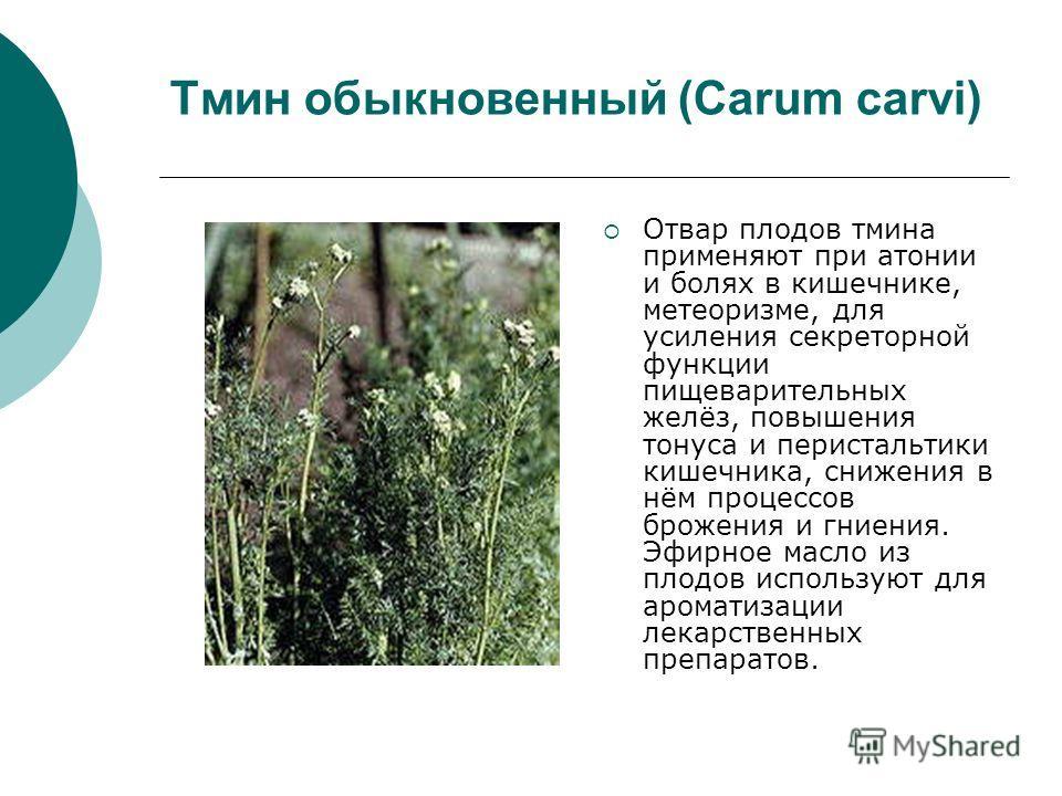 Тмин обыкновенный (Carum carvi) Отвар плодов тмина применяют при атонии и болях в кишечнике, метеоризме, для усиления секреторной функции пищеварительных желёз, повышения тонуса и перистальтики кишечника, снижения в нём процессов брожения и гниения.