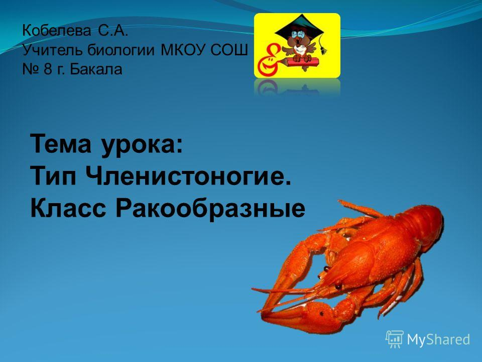 Кобелева С.А. Учитель биологии МКОУ СОШ 8 г. Бакала Тема урока: Тип Членистоногие. Класс Ракообразные