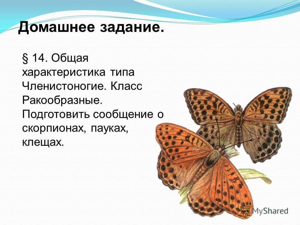 Домашнее задание. § 14. Общая характеристика типа Членистоногие. Класс Ракообразные. Подготовить сообщение о скорпионах, пауках, клещах.