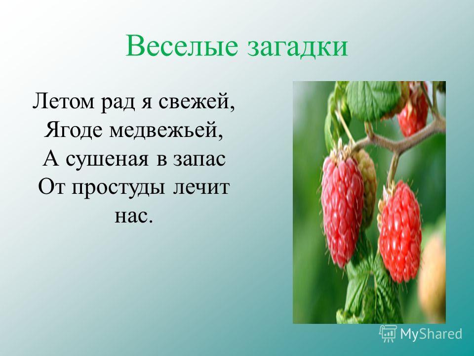Веселые загадки Летом рад я свежей, Ягоде медвежьей, А сушеная в запас От простуды лечит нас.