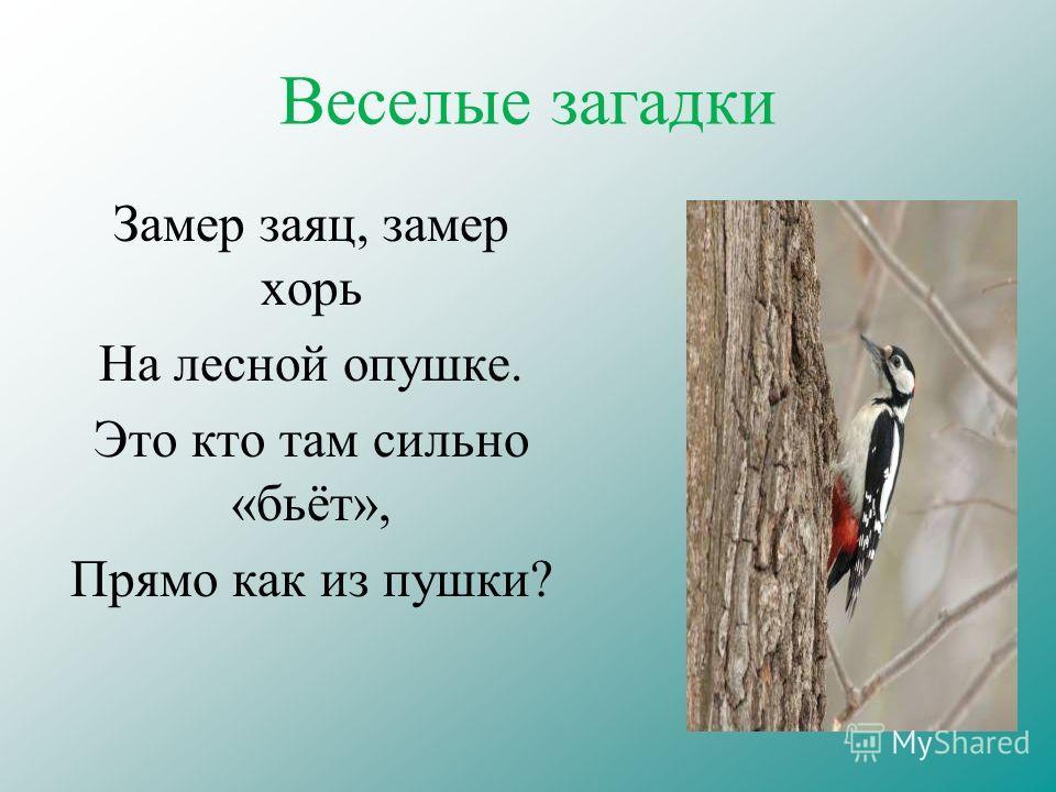 Веселые загадки Замер заяц, замер хорь На лесной опушке. Это кто там сильно «бьёт», Прямо как из пушки?