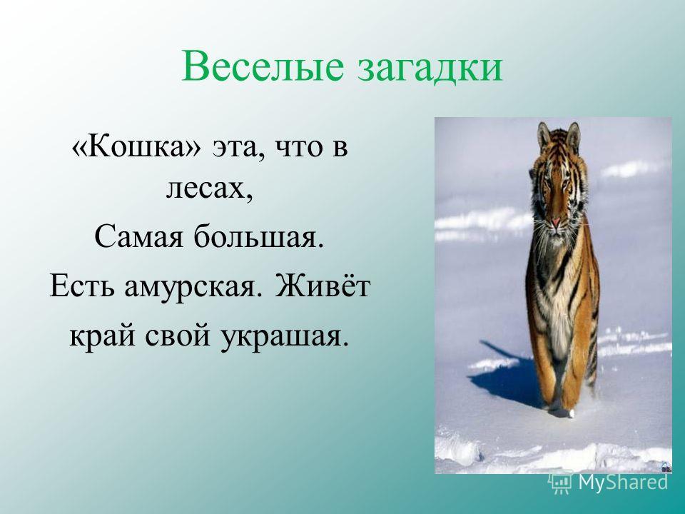 Веселые загадки «Кошка» эта, что в лесах, Самая большая. Есть амурская. Живёт край свой украшая.