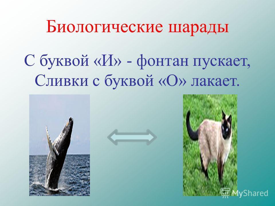 Биологические шарады С буквой «И» - фонтан пускает, Сливки с буквой «О» лакает.