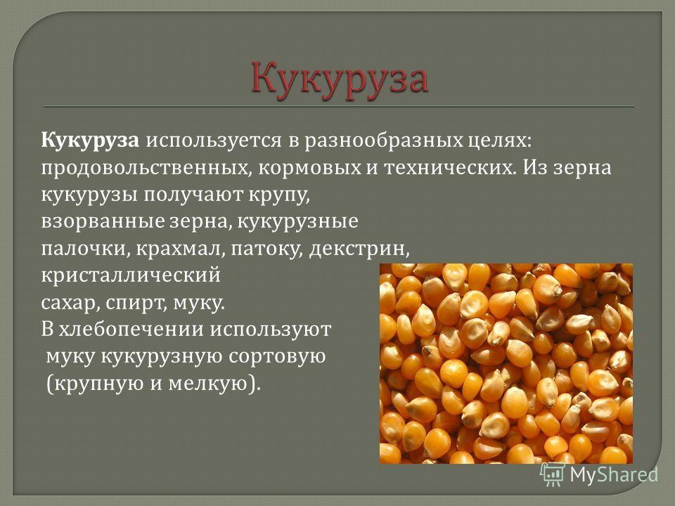 Кукуруза используется в разнообразных целях : продовольственных, кормовых и технических. Из зерна кукурузы получают крупу, взорванные зерна, кукурузные палочки, крахмал, патоку, декстрин, кристаллический сахар, спирт, муку. В хлебопечении используют