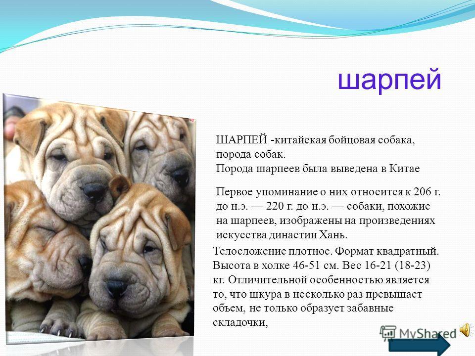 Презентация О Породах Собак Скачать Бесплатно
