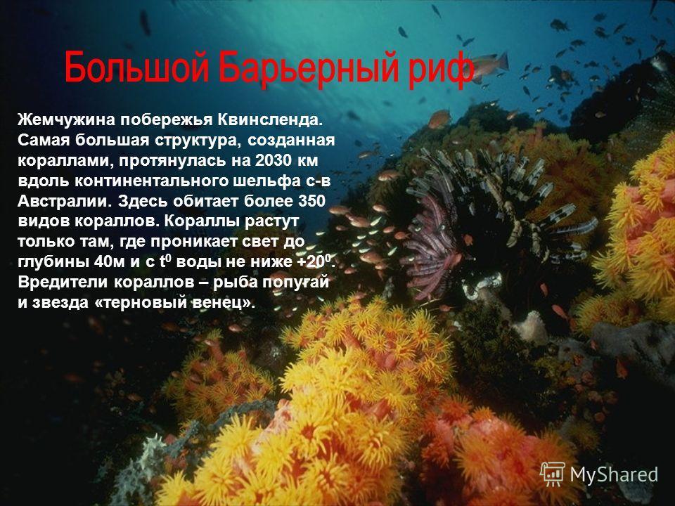 Жемчужина побережья Квинсленда. Самая большая структура, созданная кораллами, протянулась на 2030 км вдоль континентального шельфа с-в Австралии. Здесь обитает более 350 видов кораллов. Кораллы растут только там, где проникает свет до глубины 40 м и