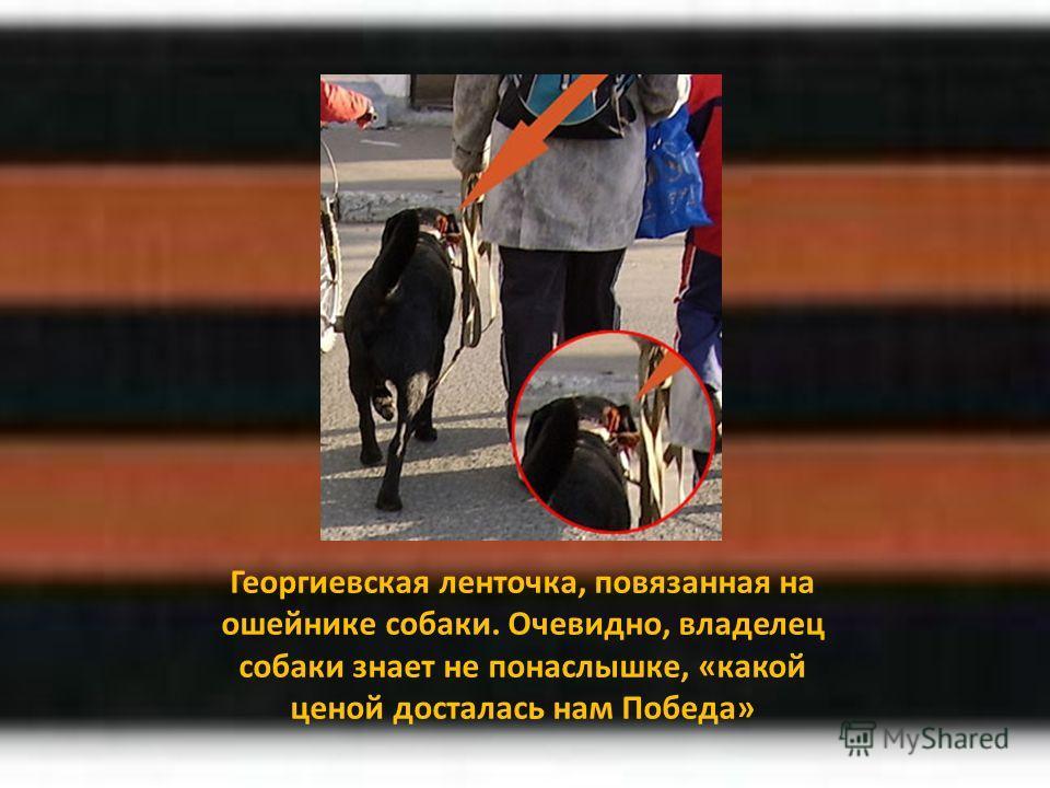 Георгиевская ленточка, повязанная на ошейнике собаки. Очевидно, владелец собаки знает не понаслышке, «какой ценой досталась нам Победа»