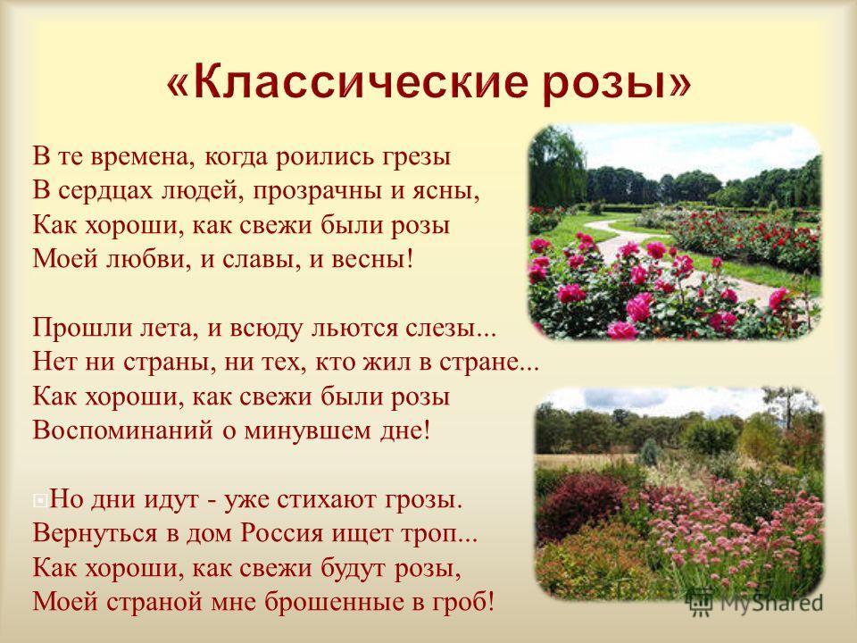 В те времена, когда роились грезы В сердцах людей, прозрачны и ясны, Как хороши, как свежи были розы Моей любви, и славы, и весны ! Прошли лета, и всюду льются слезы... Нет ни страны, ни тех, кто жил в стране... Как хороши, как свежи были розы Воспом