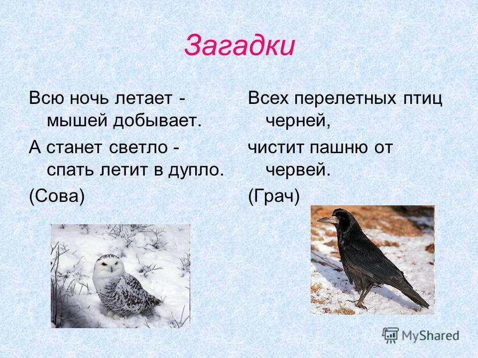 Загадки Всю ночь летает - мышей добывает. А станет светло - спать летит в дупло. (Сова) Всех перелетных птиц черней, чистит пашню от червей. (Грач)