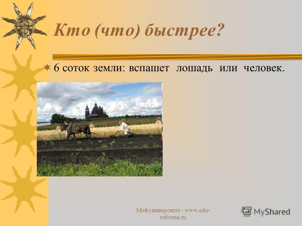 Мой университет - www.edu- reforma.ru Кто (что) быстрее? 6 соток земли: вспашет лошадь или человек.