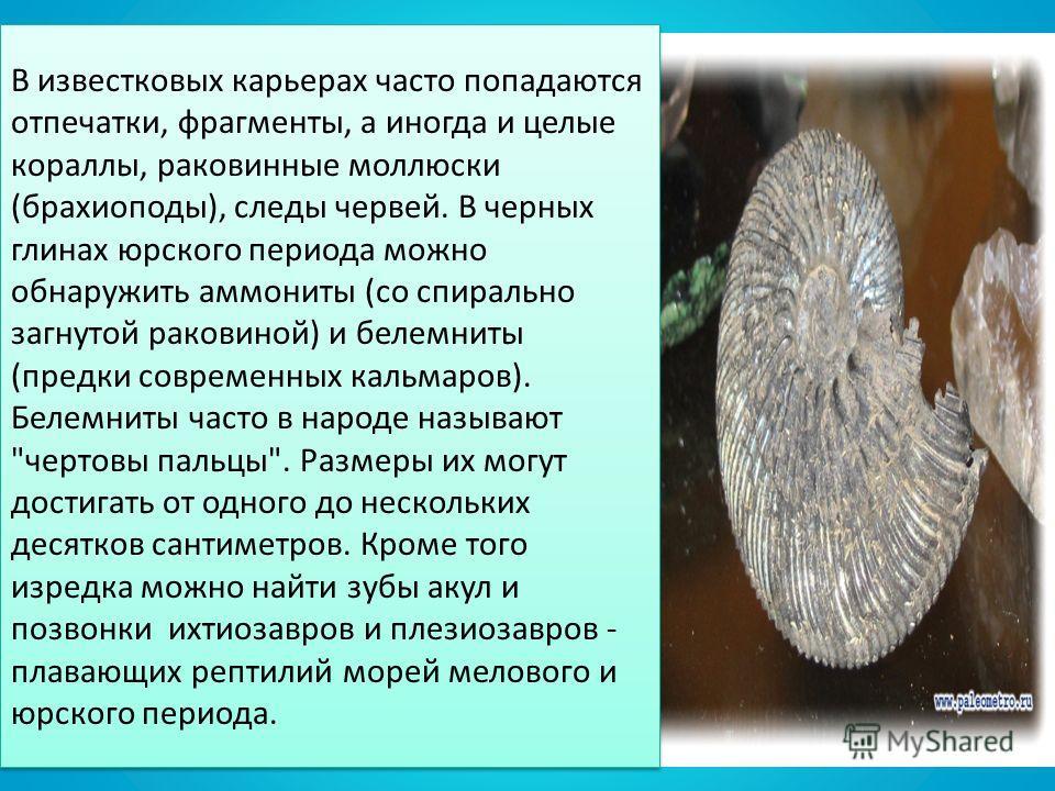 В известковых карьерах часто попадаются отпечатки, фрагменты, а иногда и целые кораллы, раковинные моллюски (брахиоподы), следы червей. В черных глинах юрского периода можно обнаружить аммониты (со спирально загнутой раковиной) и белемниты (предки со