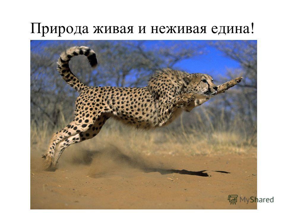 Природа живая и неживая едина!