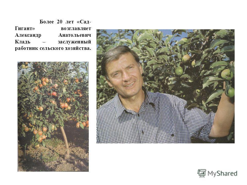 Более 20 лет «Сад- Гигант» возглавляет Александр Анатольевич Кладь – заслуженный работник сельского хозяйства.