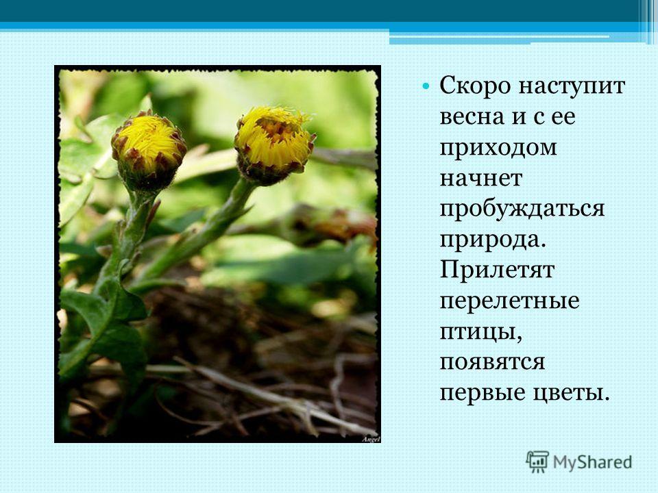 Скоро наступит весна и с ее приходом начнет пробуждаться природа. Прилетят перелетные птицы, появятся первые цветы.