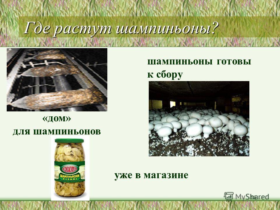 Где растут грибы подосиновики подберёзовики сыроежки грузди лисички шампиньон маслята 17