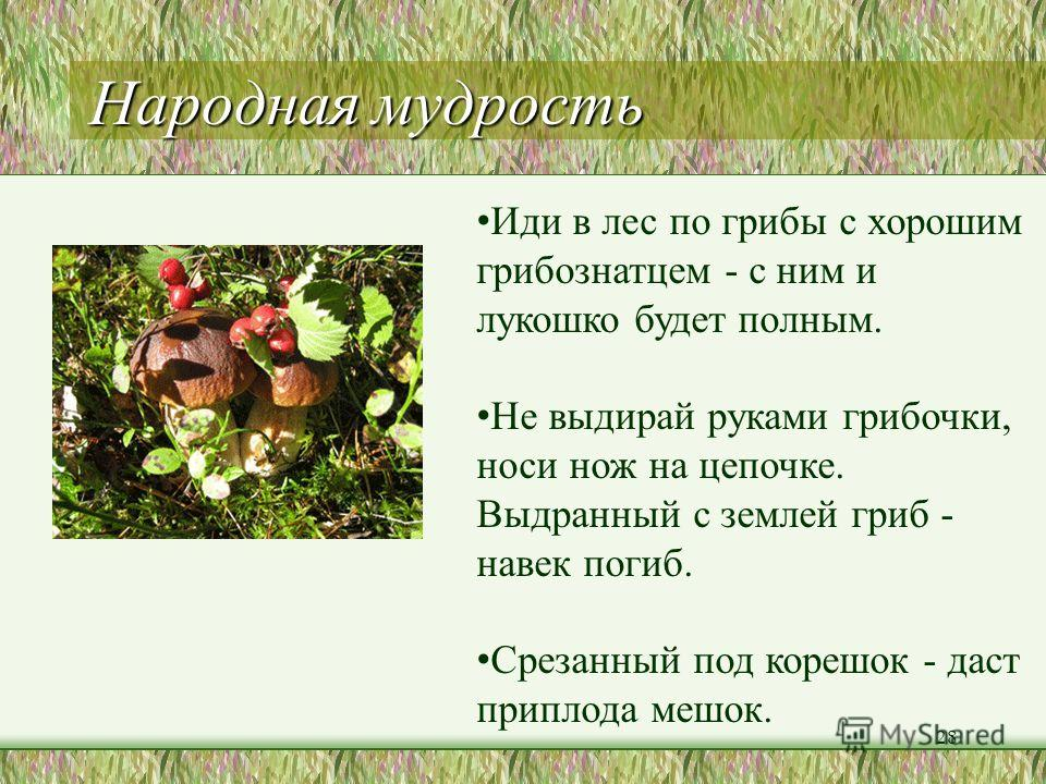 Найди «лишнее» слово сырая еда )) о > 27 сыроежки 2 п 1 подосиновик д б е 3 сыроежки ё з о в 4 лисички к