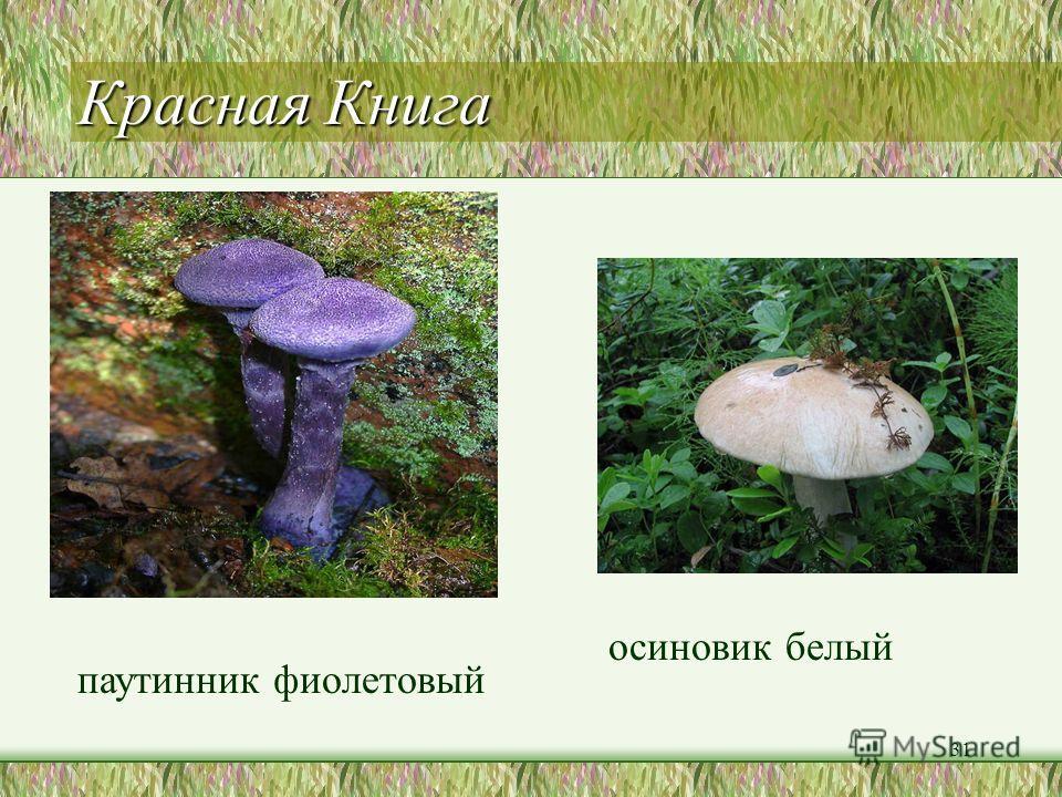 Тихая охота 1. Кладите в корзинку только хорошо известные вам грибы; сомневаетесь оставьте гриб на месте. 2. Не берите перезревшие грибы в силу возраста они могут стать ядовитыми. 3. Старайтесь не трогать незнакомые грибы руками и ни в коем случае не