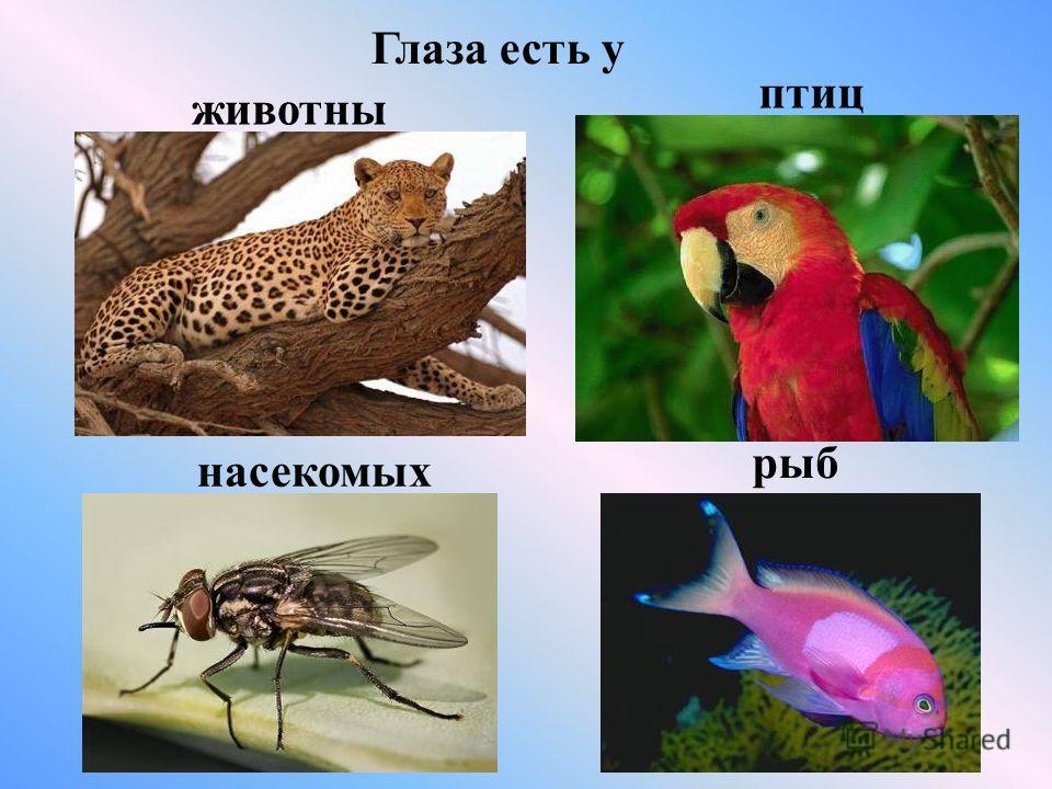 Глаза есть у животных птиц насекомых рыб