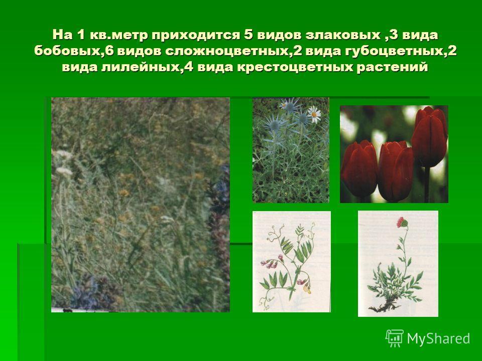 На 1 кв.метр приходится 5 видов злаковых,3 вида бобовых,6 видов сложноцветных,2 вида губоцветных,2 вида лилейных,4 вида крестоцветных растений