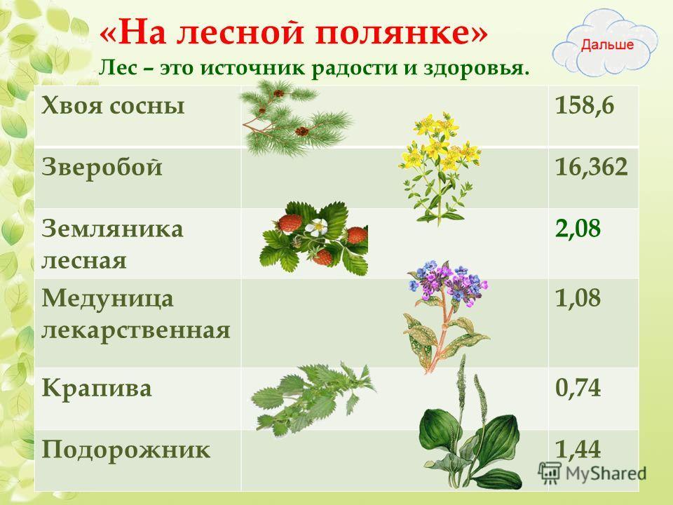 «На лесной полянке» Лес – это источник радости и здоровья. Вы можете Хвоя сосны 158,6 Зверобой 16,362 Земляника лесная 2,08 Медуница лекарственная 1,08 Крапива 0,74 Подорожник 1,44