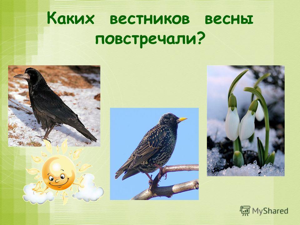 Каких вестников весны повстречали?