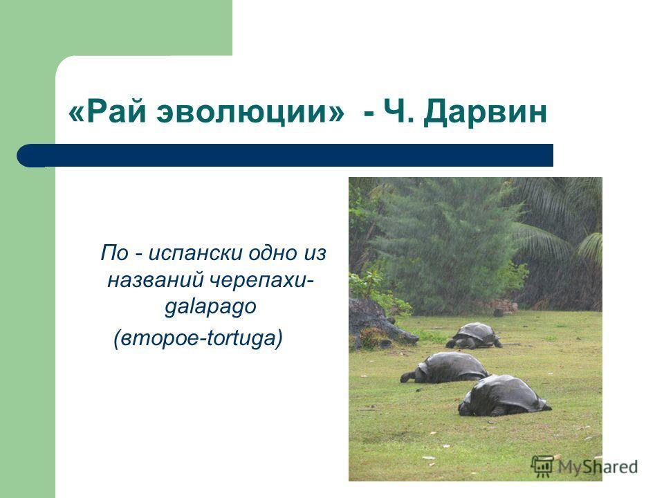«Рай эволюции» - Ч. Дарвин По - испански одно из названий черепахи- galapago (второе-tortuga)
