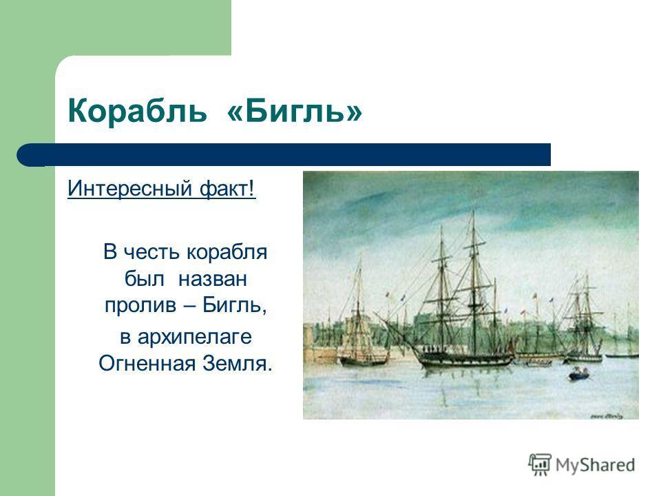 Корабль бигль интересный факт в
