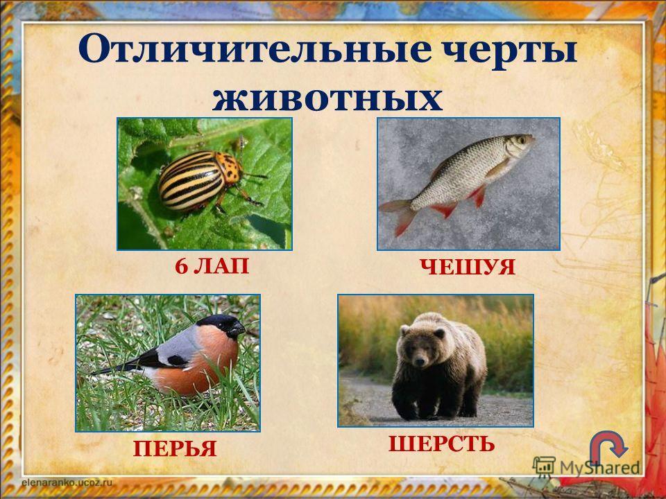 Отличительные черты животных 6 ЛАП ПЕРЬЯ ШЕРСТЬ ЧЕШУЯ