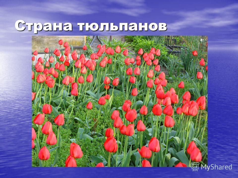 Страна тюльпанов